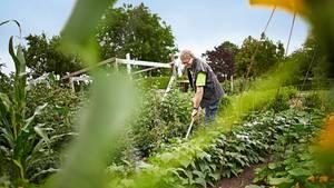 René Wadas ist Pflanzenarzt und plädiert für möglichst wenig Gift im Garten