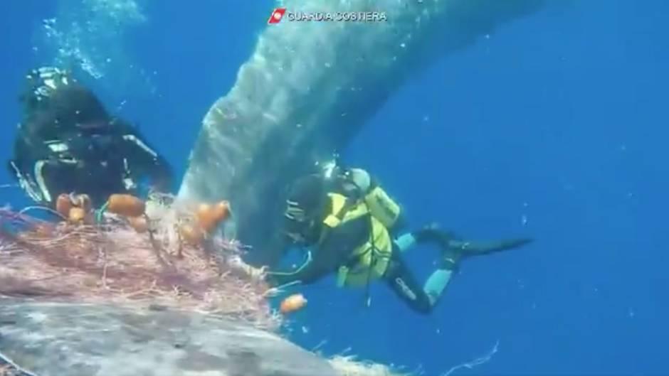Mittelmeer: Pottwal verheddert sich in Fischernetz - doch die italienische Küstenwache ist schnell zur Stelle