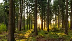 Alte Wälder haben eine enorme Bedeutung im Kampf gegen den Klimawandel