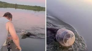 Mann befreit Bär auf dem Marsh-Miller Lake im US-Bundesstaat Wisconsin