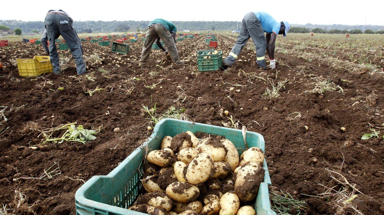 Agricultura: Trabajar en los campos de Italia: