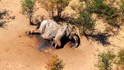 Elefanten-Sterben in Botsuana