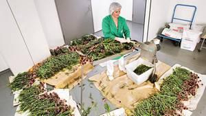 Pflanzenverarbeitung bei Weleda