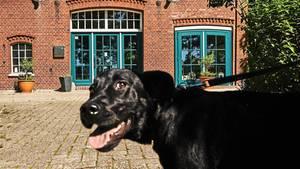 Labradorhündin Luna vor dem Pfötchenhotel