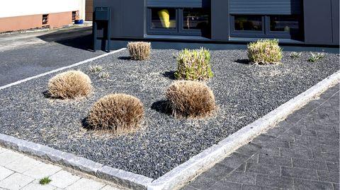 """Tipps für den Garten: Gartenexpertin mahnt: """"Schottergärten sind einfach eine Katastrophe"""""""