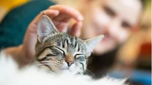 Katze wird von Mensch gestreichelt - Studie der Universität des Saarlandes