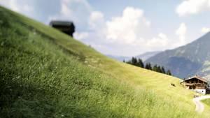 Eine Bergwieseim Zillertal