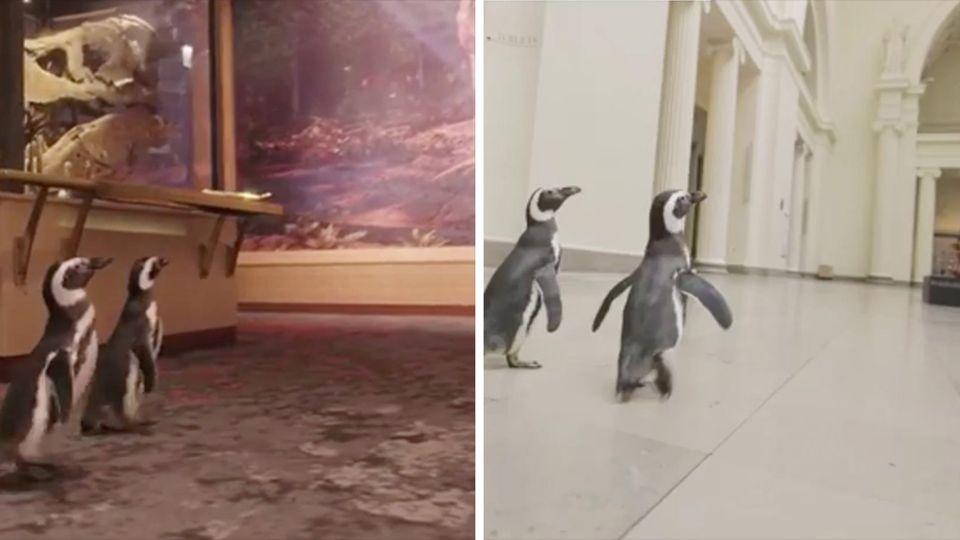 Pinguine Chicago Museum