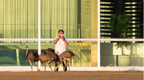 Jair Bolsonaro, Präsident von Brasilien, telefoniert mit Mundschutz hinter mehreren Emus vor seiner offiziellen Residenz