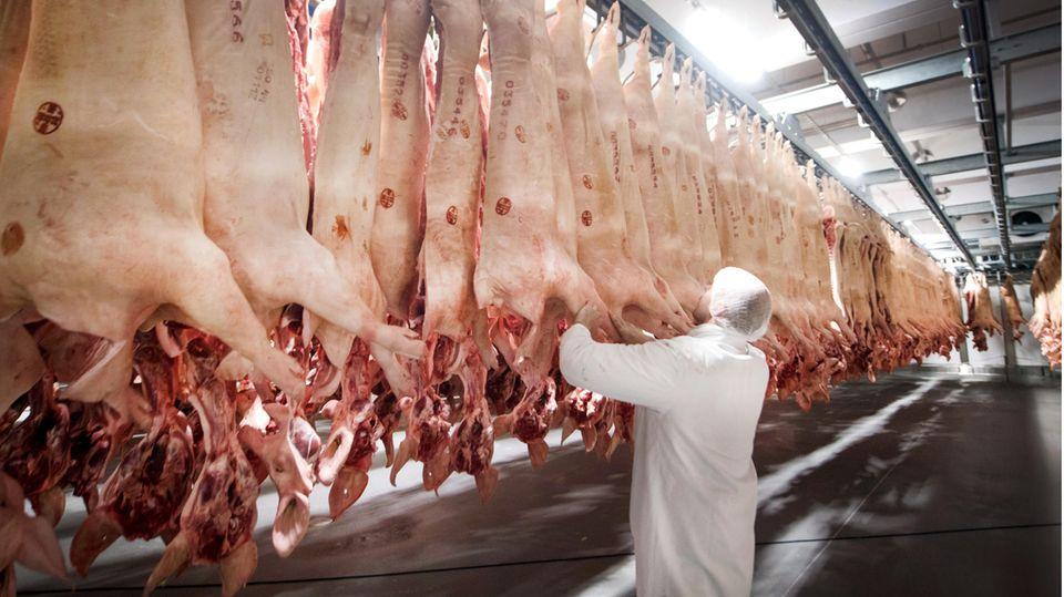 Schlachtbetrieb Tönnies: Frisch geschlachtete Schweine hängen in einem Kühlhaus
