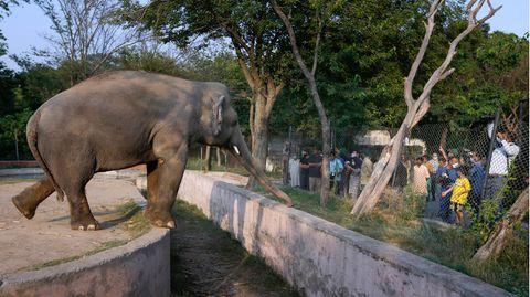 Der Elefant Kaavan zeigt sich Besuchern im Marghazar-Zoo