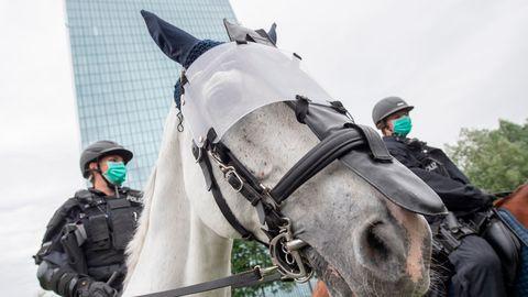 Reiterstaffel der Polizei Hamburg sucht Pferde: Tierschützer besorgt