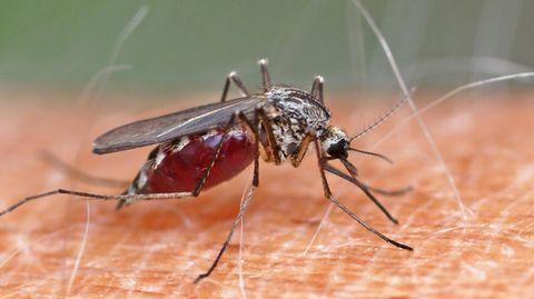 Mückenstiche: Welches Mittel ist das Beste?