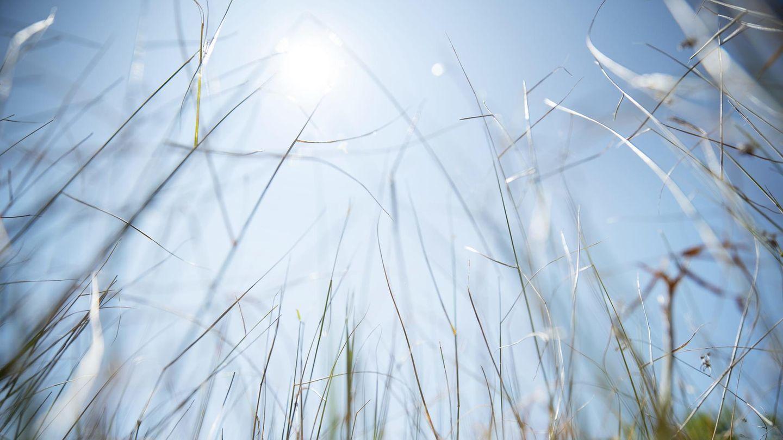 Hitze und Sonne bereiten nicht allen Menschen Freude