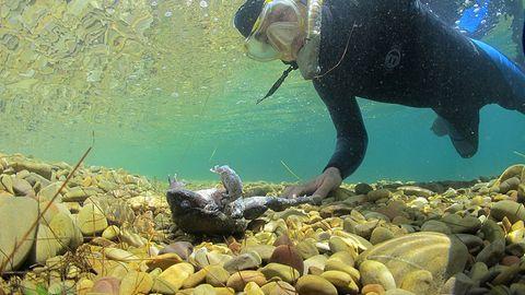 Auch der hohe Grad an Wasserverschmutzung im bolivianischen Titicaca-See lässt die Riesenfrösche verenden.