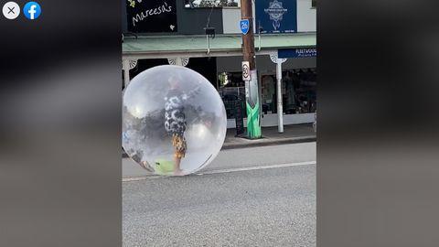 Besonderer Corona-Schutz? Mann läuft in aufblasbaren Plastikball durch die Gegend