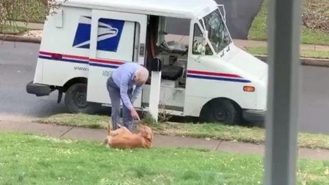 Unzertrennlich: Hund und Briefträger sind ziemlich beste Freunde