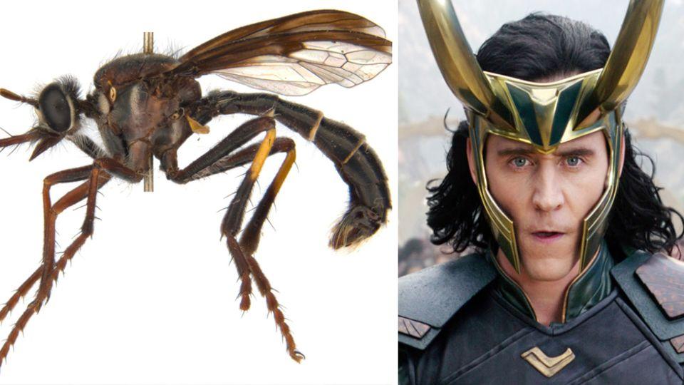 Marvel-Bösewicht Loki ist neben einer Fliege abgebildet.
