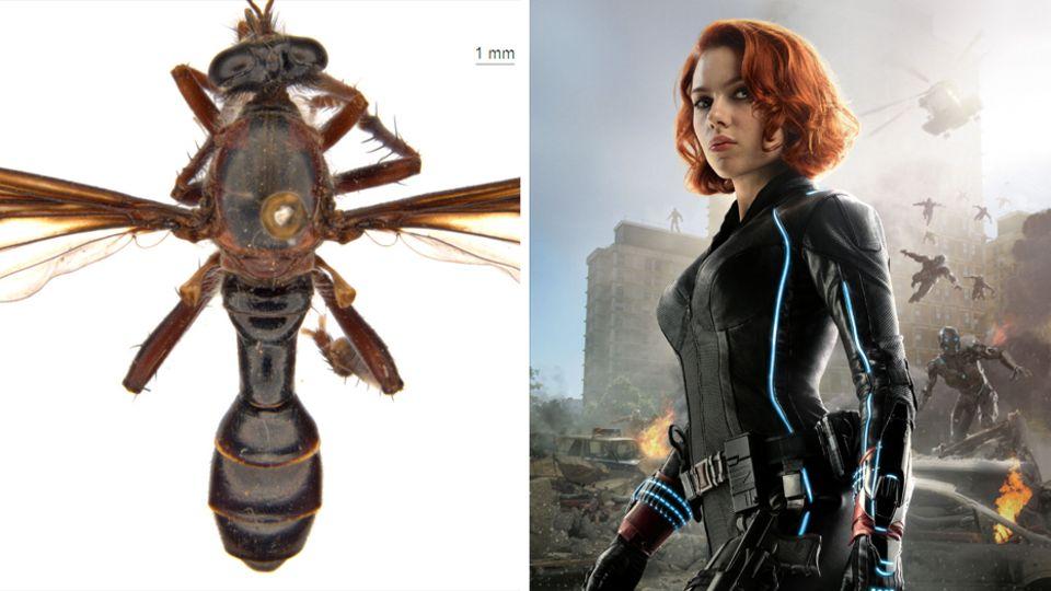 Die Marvel-Heldin Black Widow ist neben einer Fliege abgebildet.