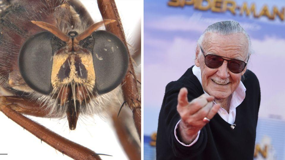 Stan Lee ist neben einer Fliege abgebildet.