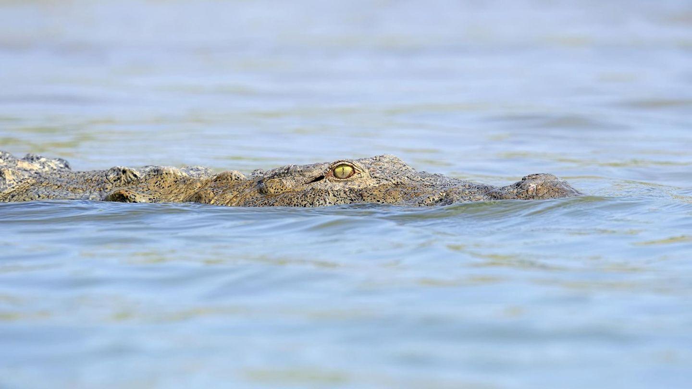 Indien: Ein Serienmörder ließ Krokodile sie Spuren seiner Taten beseitigen (Symbolbild)