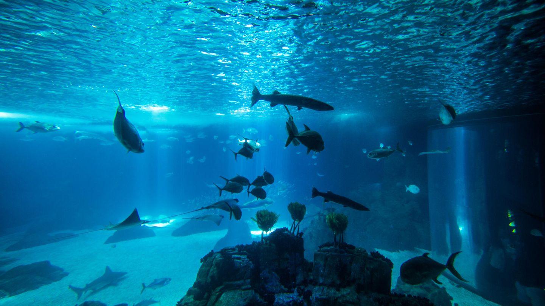 Australier springt in Zoo-Aquarium