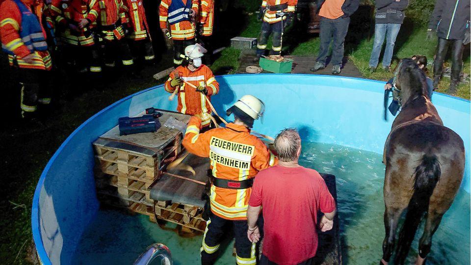 Einsatzkräfte der Feuerwehr Obernheim kümmern sich um ein Pferd