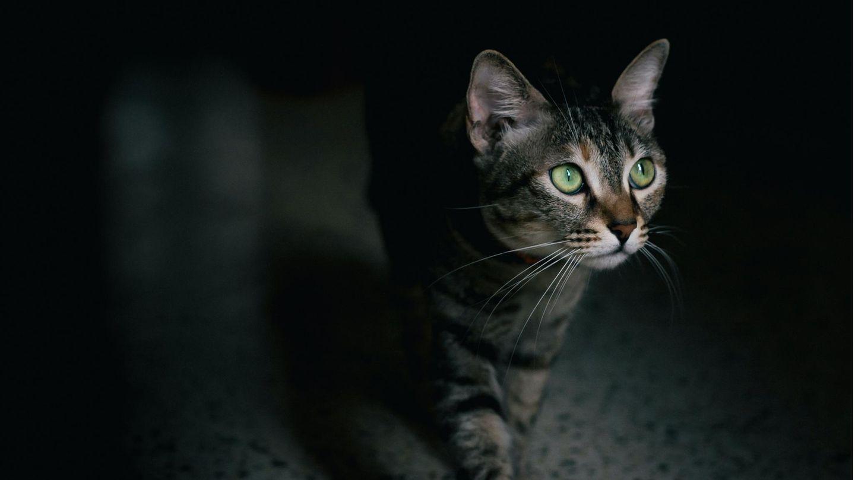 Katze schmuggelt Drogen ins Gefängnis – eine Wiederholungstäterin?