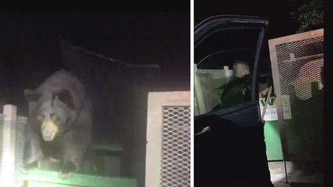 Polizist rettet Bären aus Mülltonne