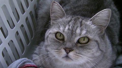 Menschen können Haustiere mit Corona infizieren