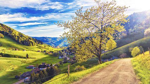 Reisereportage: Der Schwarzwald - von Kitsch zu Kult