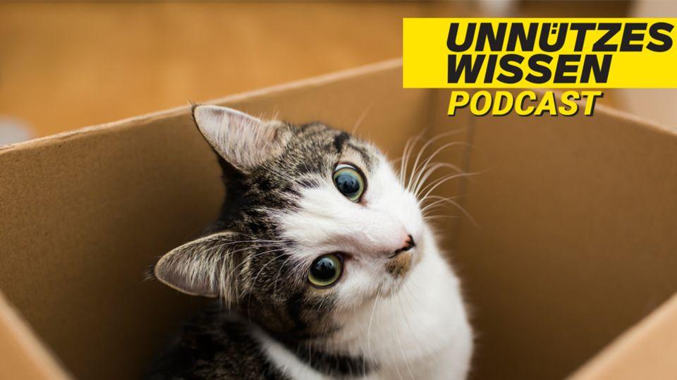 Unnützes Wissen – Katzen: Besser als Hunde? Die Katze ist das beliebteste Haustier Deutschlands