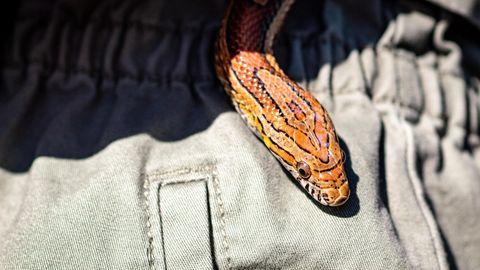 Eine Schlange kriecht über ein Hosenbein