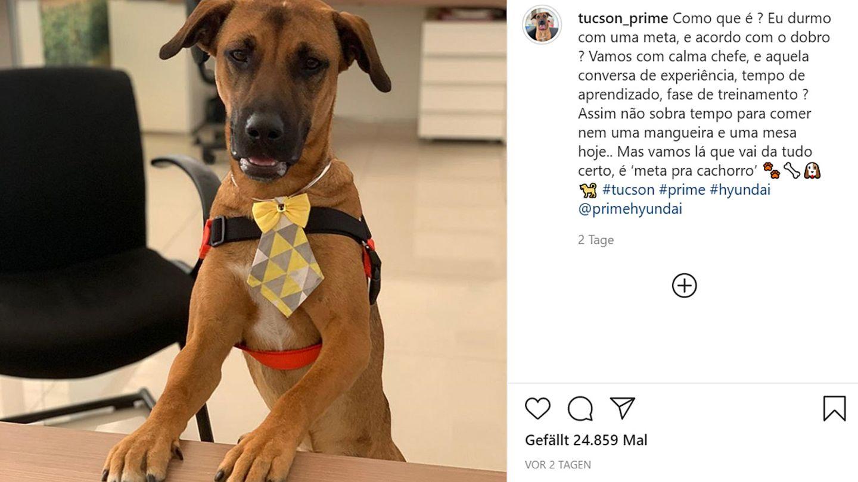Autohaus in Brasilien adoptiert Straßenhund