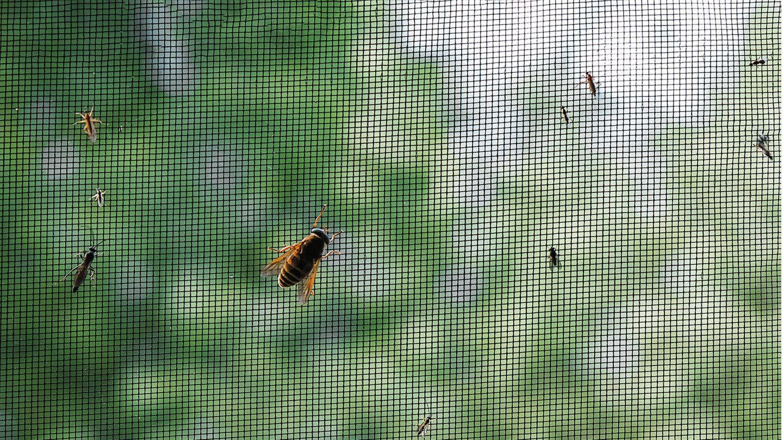 Mit einem Fliegengitter bleiben die Insekten draußen