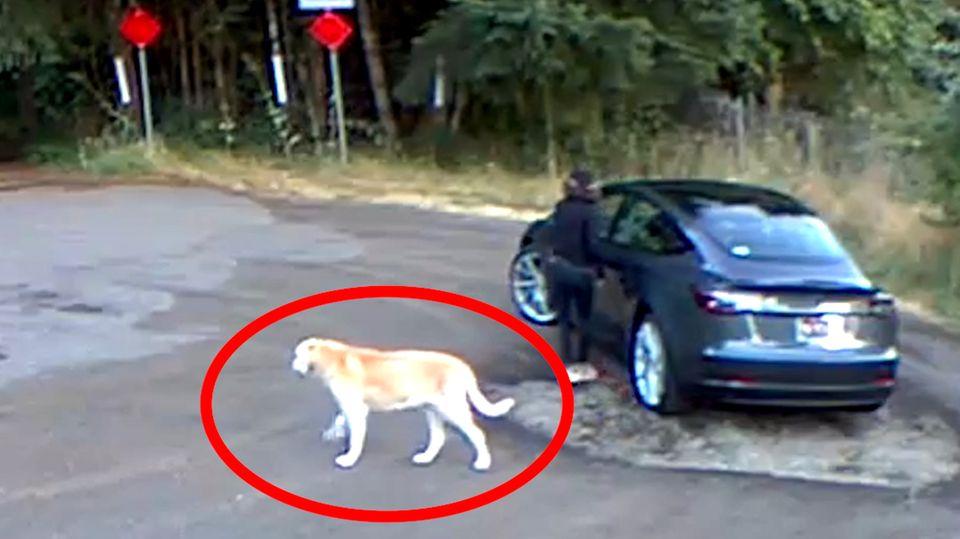 Hund ausgesetzt: Frau lässt Golden Retriever allein zurück