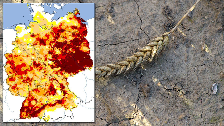 Dürre in Deutschland