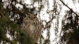 ERLEBEN  OWL PARK: In seinem Refugium in St. Vigil führt Mario Kelemina Besucher in die Welt von Eulen und Greifvögeln ein und lässt einige aufsteigen, etwa Bussard, Steinkauz,  Schleiereule. Enneberg/ St. Vigil, Ciamaor, Tel. +39/393/875 54 24, www.sanvigilio.com