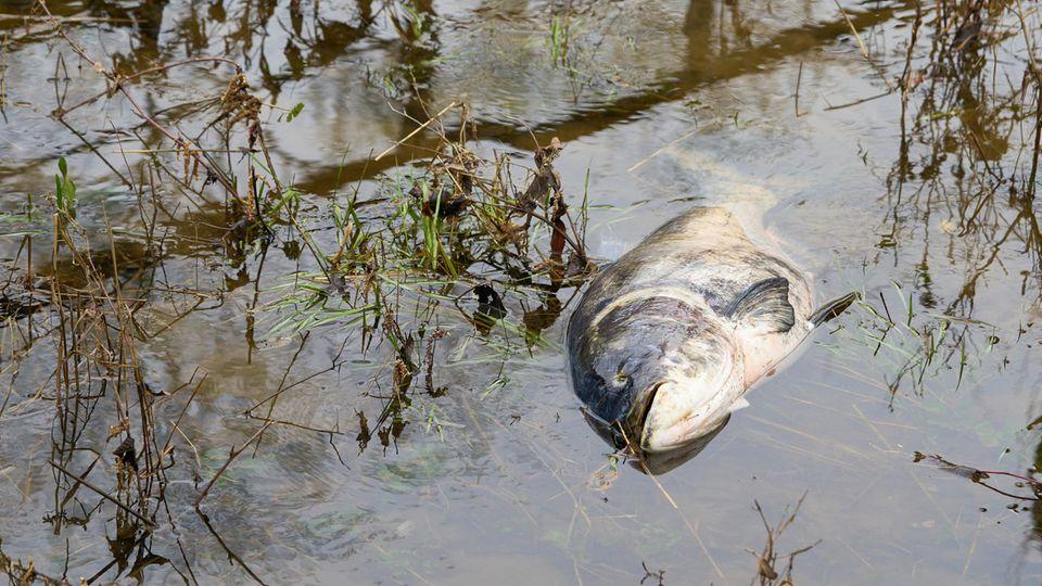 Frankreich: In dem französischen Fluss Aisne kam es zu einem Fisch-Massensterben (Symbolbild)