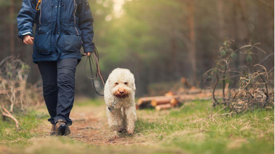 Julia Klöckner fordert Gassi-Pflicht für Hunde – aber wer soll das kontrollieren?
