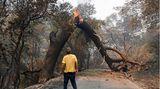Vacaville, USA.Ein Mann blickt auf einen brennenden Baum, der ihm den Weg versperrt. In ganz Kalifornien kämpfen mehr als 10.000 Feuerwehrleute gegen zwei Dutzend Großbrände. Die Flammen haben Tausende Menschen aus ihren Häusern getrieben. Vier Menschen sindnach Behördenangaben bereits ums Leben gekommen.