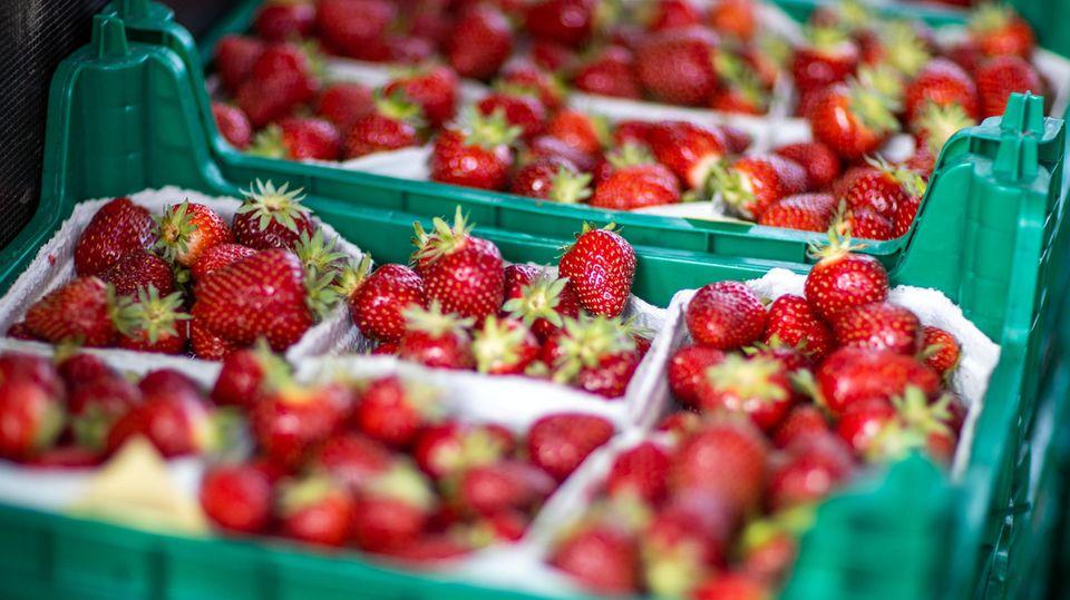 Familienvater findet in Australien Nadeln in Erdbeeren