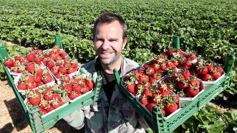 Robert Dahl, Chef von Karls Erdbeerhof, bei der Erdbeerernte