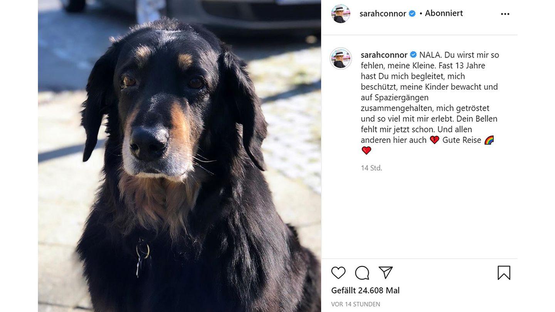 Vip News: Sarah Connor trauert um ihre Hündin