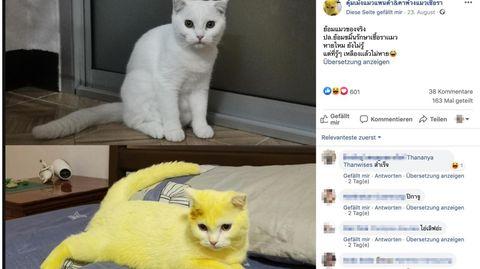 Hartnäckiges Kurkuma: Behandlung nach einer Infektion – jetzt leuchtet diese Katze gelb
