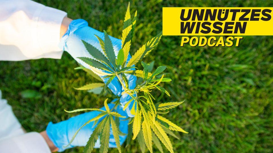 Unnützes Wissen – Pflanzen: Legales Marihuana hat in den USA etwa 245.000 Arbeitsplätze geschaffen