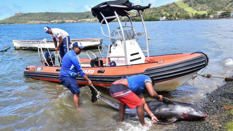 Drei Männer bergen den Kadaver eines Delfins auf Mauritius