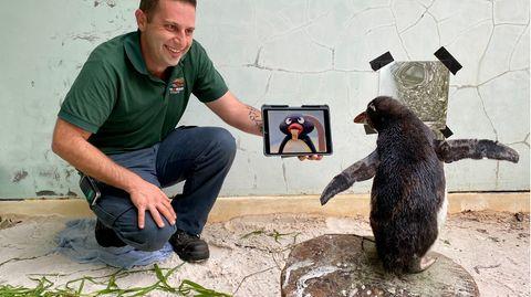offenbar hat Pierre der Pinguin auch eine Vorliebe für die Kinderserie Pingu