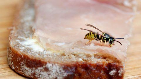 Was hilft gegen Wespen? Wespe auf einem Schinkenbrot