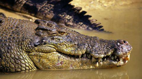 Krokodil (Symbolbild)